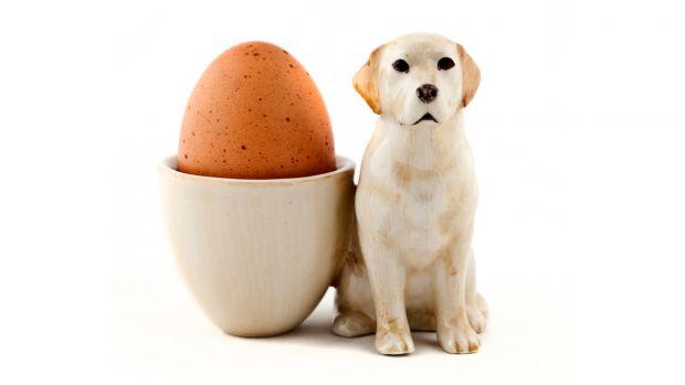 Quail Golden Labrador Egg Cup