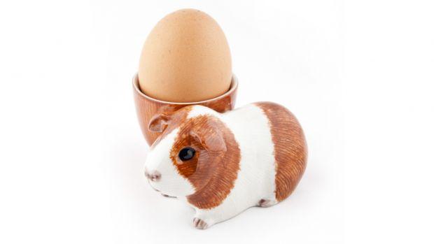 Quail Dutch Guinea Pig Egg Cup