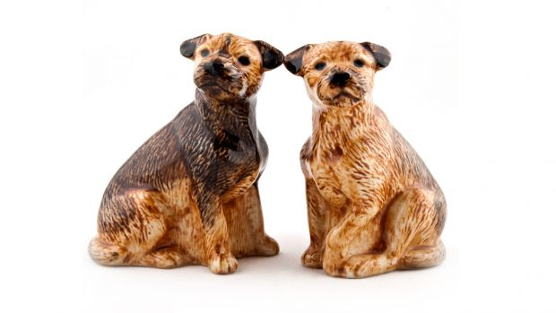 Quail Border Terrier Salt & Pepper